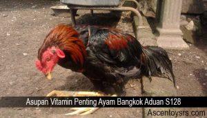 Asupan Vitamin Penting Ayam Bangkok Aduan S128