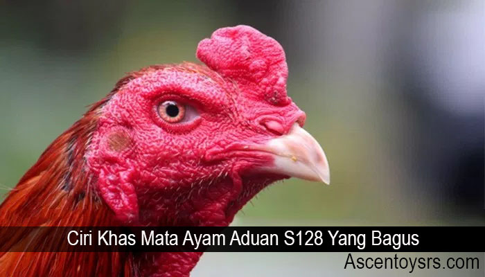 Ciri Khas Mata Ayam Aduan S128 Yang Bagus