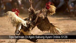 Tips Bermain Di Agen Sabung Ayam Online S128