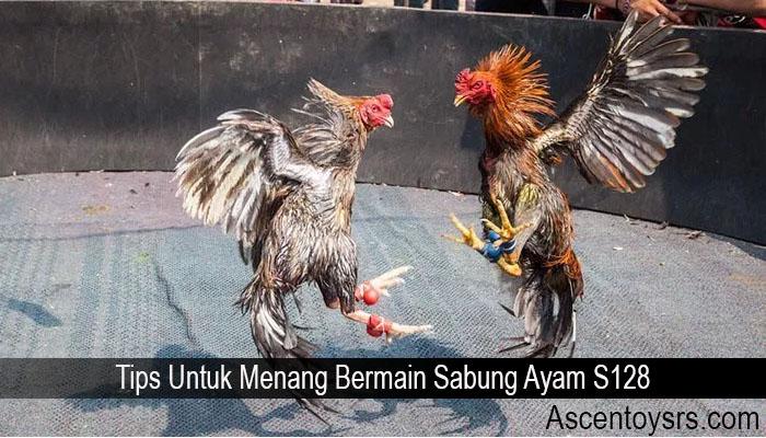 Tips Untuk Menang Bermain Sabung Ayam S128